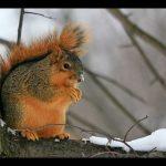 Korzystne pakiety wypoczynku zimowego w Beskidach
